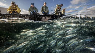 Photo of Why the world's most fertile fishing ground is facing a 'unique and dire' threat