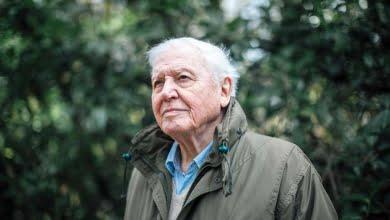 Photo of David Attenborough warns of a world on the brink