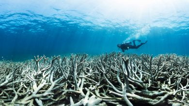 Photo of Great Barrier Reef should be listed as 'in danger', Unesco recommends